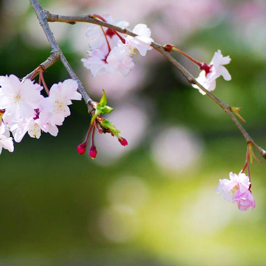 【ギャラリー】2018年春の広島県